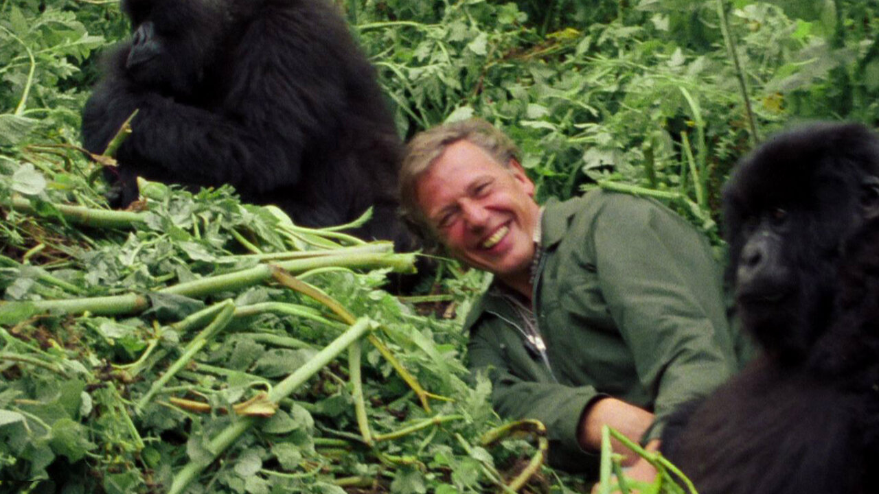 David Attenborough: A Life on Our Planet | Netflix Official Site